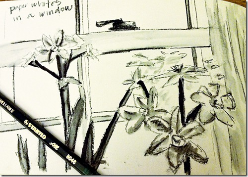 paperwhites in a windowsketch