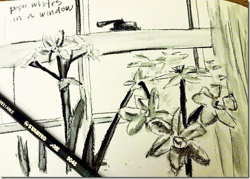paperwhites in a windowsketch