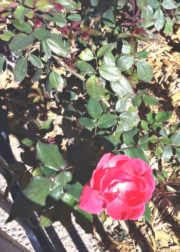 disney flower