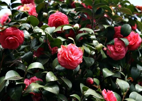 IMG_1317_tondabayashi flowers