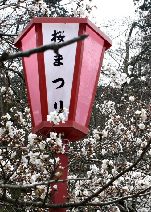 IMG_1451_Izushi cherry and lantern