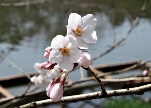 IMG_1599_flowers