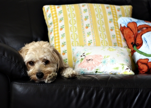 IMG_2301_puppycakes and pillows